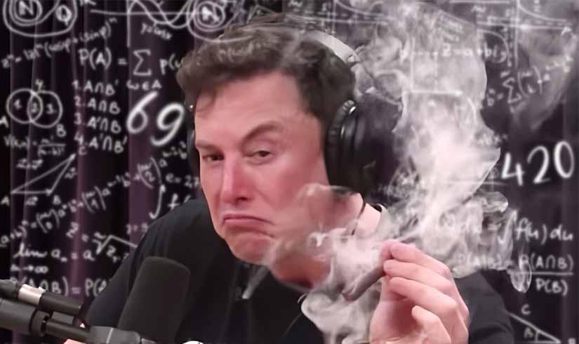 Elon Musk The Memestermind